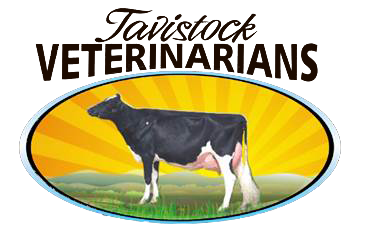 Welcome to Tavistock Veterinarians - Dairy Division